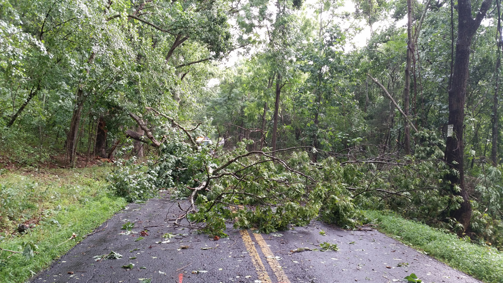 Road blocked by fallen tree