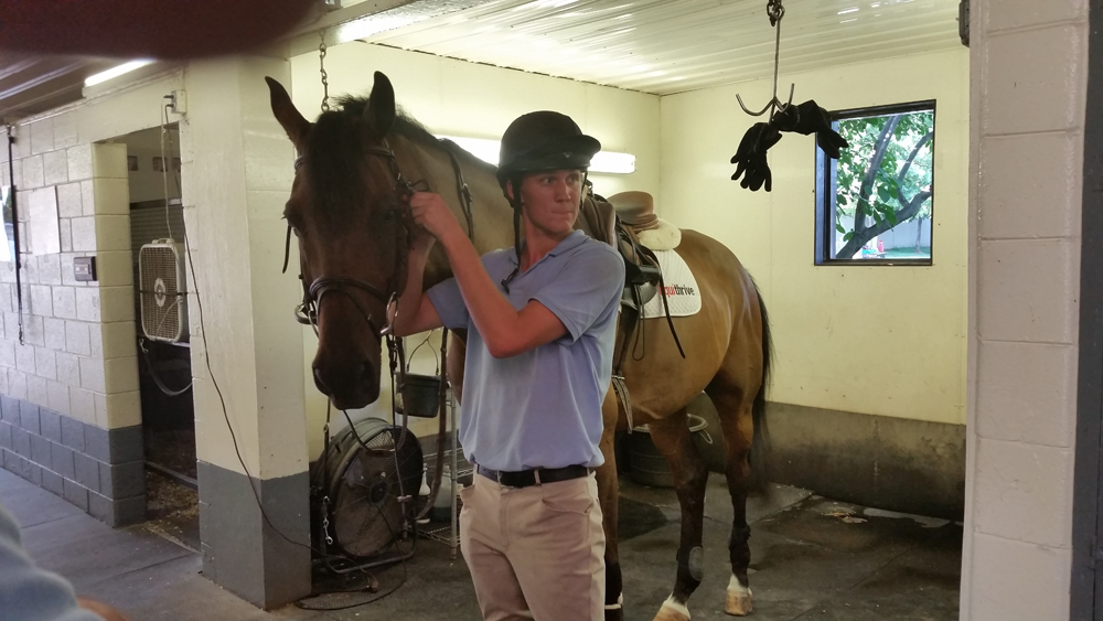 Will's new horse from the Netherlands