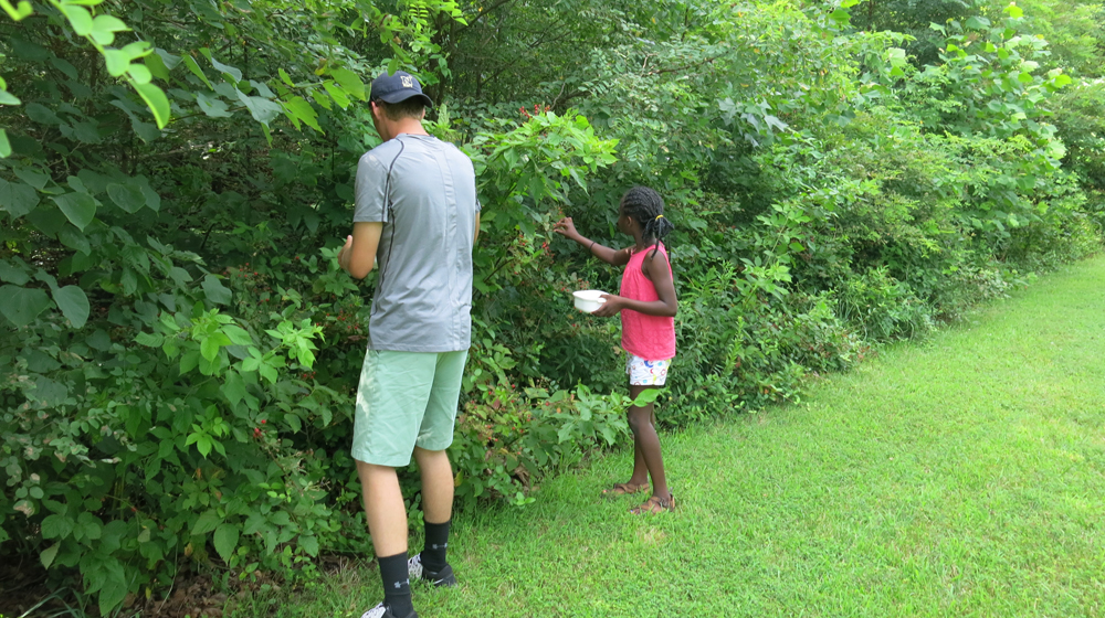 Will and Mindy picking blackberries