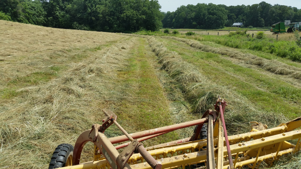 my sloppy hay raking