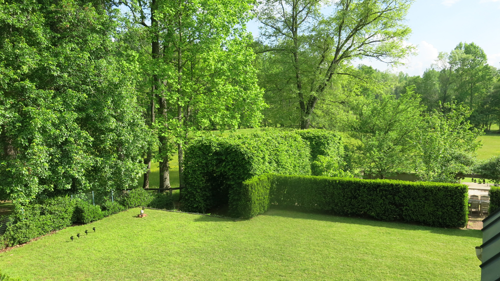 hornbeam tunnel and yew hedge