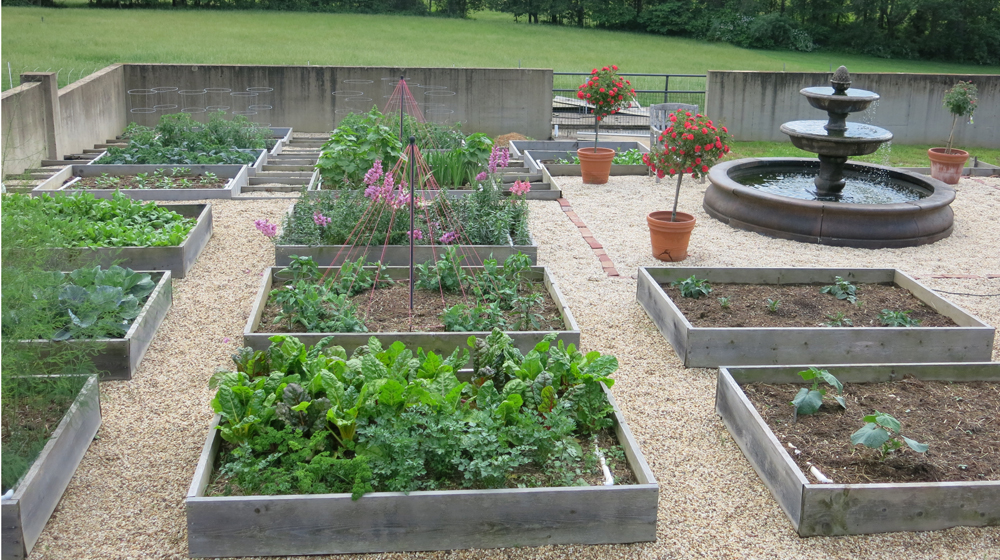 meticulously weeded kitchen garden