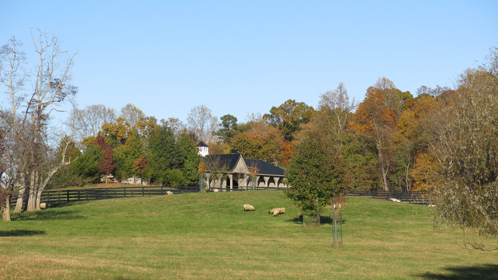 view of barn from pond paddock