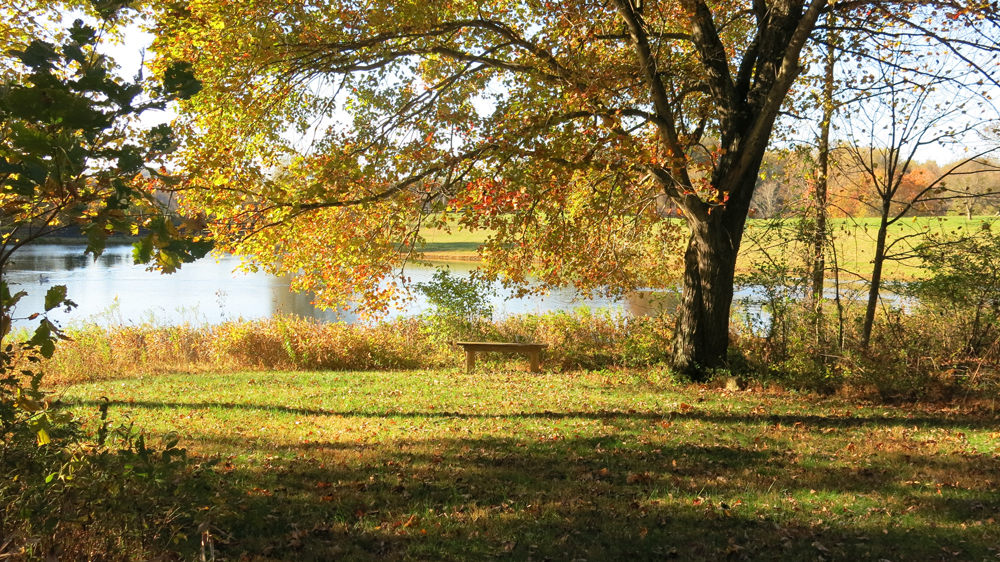 view of sacred grove and dad's bench