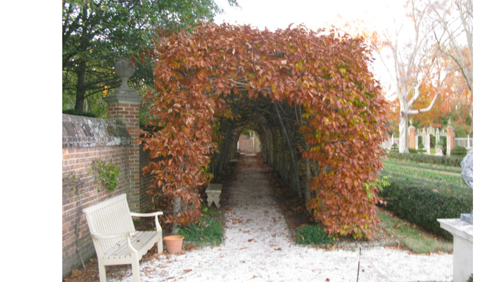 the Williamsburg Hornbeam tunnel is a pale imitation of the one at Touchstone Farm