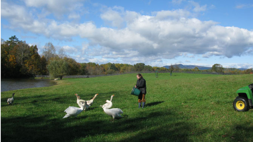 Stephanie meets the swans and geese
