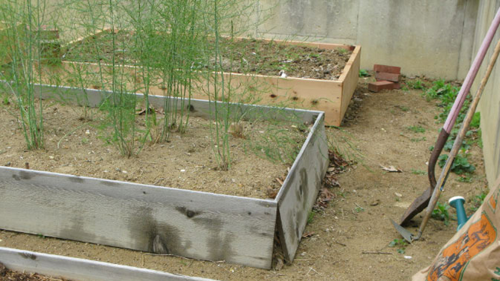 raised beds need replacing