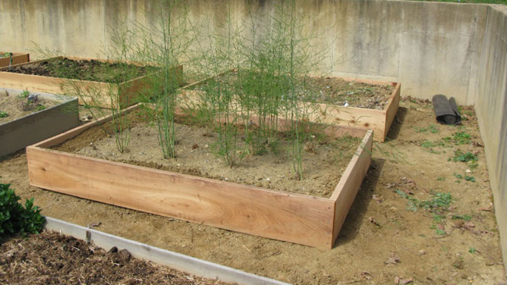 finished asparagus bed