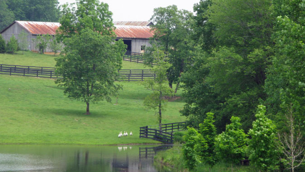 view of barn across the pond