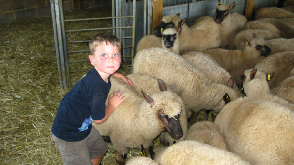 Grant loves the sheep